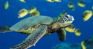 تراجع أعداد كائنات الحياة البرية بنحو 60% خلال 46 عاما
