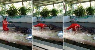 رجل متهور يضع رأسه بين فكي تمساح… شاهد ما حصل