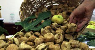 محصول التين في إدلب.. وفرة في الإنتاج وصعوبة في التسويق