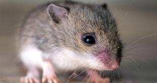 """""""الفئران"""" تأكل أضابير الطلاب في جامعة تشرين!"""